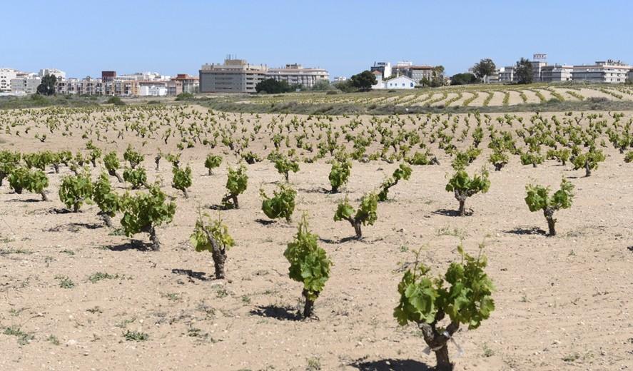 Виноградники Торревьехи, винодельня и 5 изысканных вин