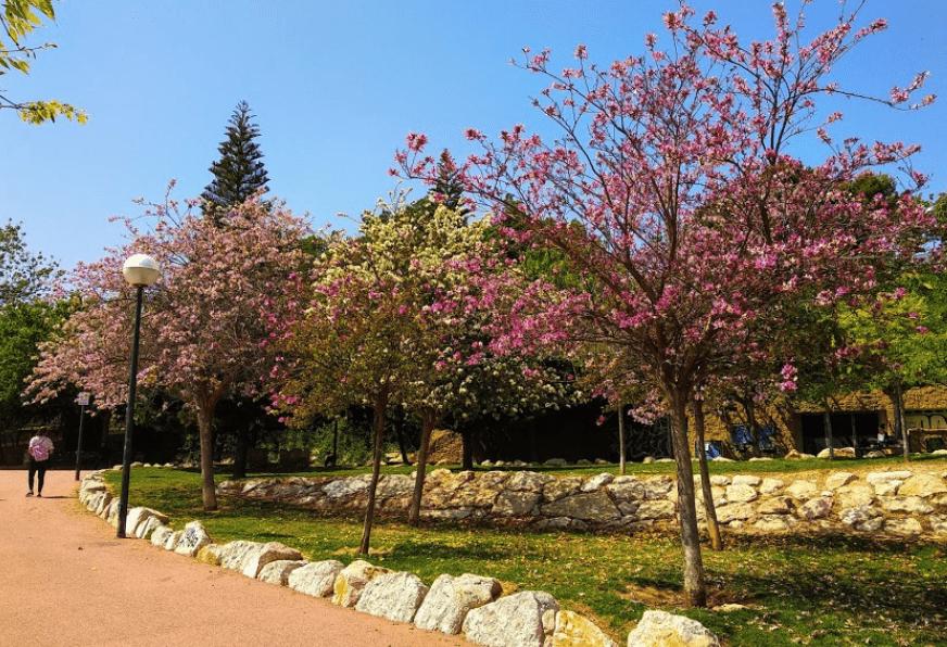 Парки Аликанте, Испания. Найди свой любимый парк в Аликанте