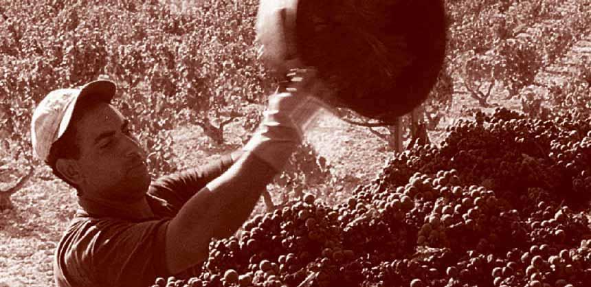Испанские вина: прогулка по винодельне Bocopa в Аликанте